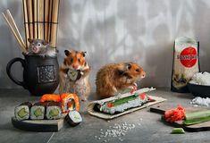 La mignonne Invasion des Hamsters de Elena Eremina (3)
