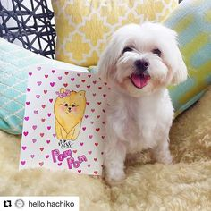 Oh mine.. I see a mini me standing besides Hachiko! We look cute together aren't we ? All thanks to Hachiko's mama magic fingers , she drew an even prettier me! Me n my Mommy loves it so much! Hopefully next time the real me shall sit besides Hachiko 🤗🤗🤗Thank u to the sweet & kind hearted Hachiko n her Mama once again 😘😘😘#Repost @hello.hachiko with @repostapp ・・・ Check it out! Fulfilled a request from one of our pawtastic pals @iam_pompom Mama took awhile to work on it but we are all…