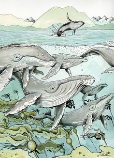 Claire Watson 'Humpback Whales'