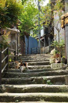 Aesthetic Japan, City Aesthetic, Bg Design, Japan Street, Japanese Streets, Japanese Architecture, Felder, Photo Reference, Japan Travel