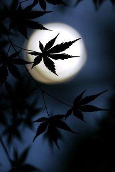 Moon (via Photo Awards Sun Moon, Stars And Moon, Arte Bob Marley, Shoot The Moon, Moon Shadow, Photo Awards, Belle Photo, Night Skies, Night Sky Moon