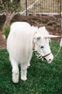 a real unicorn party visitor