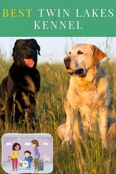 07 Top Pins Video-Labrador puppies for sale Kansas city-Reliable Sources 2021, 2022, 2023..... #Labrador #labradorretriever #labradorite #labradors #labradorsofinstagram Kansas City, Labrador Puppies For Sale, Twin Lakes, Labrador Retriever, Dogs, Animals, Labrador Retrievers, Animales, Labradoodle Puppies For Sale