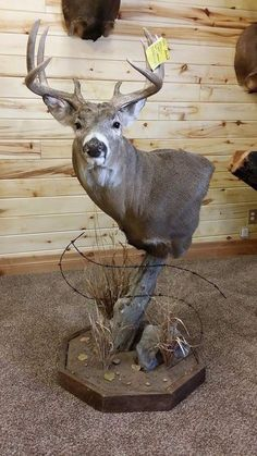 I like this mount but wouldnt put it on a pedestal. Deer Mount Decor, Antler Mount, Deer Decor, Antler Art, Deer Hunting Decor, Hunting Cabin, Whitetail Hunting, Hunting Stuff, Whitetail Bucks