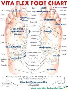 Young Living Essential Oils: Vita Flex Foot Chart