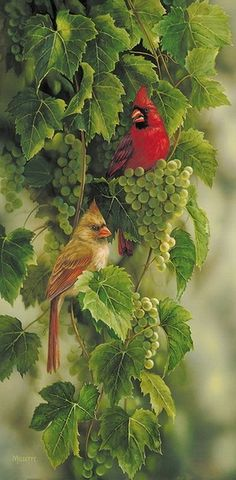 beautymothernature:  Cardinals and grapes share moments