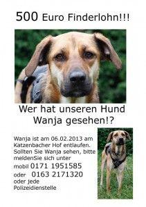 Hund Wanja wird gesucht  -: