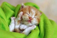 You kitty are the number 1 cutie tootie!