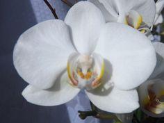 Orquídeas... sempre belas!!