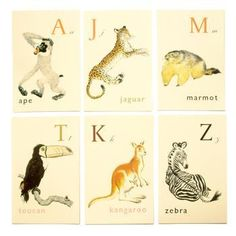 animal illustrations to inspire and create.