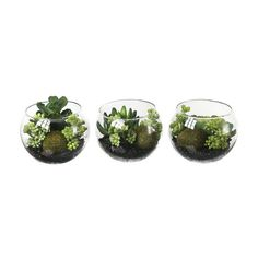 Succulent Glass Bowl ❤ liked on Polyvore featuring home, home decor, plants, fillers, decor, flowers, glass bowl and glass home decor
