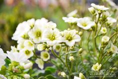 Terassenpflanzen für Töpfe und Kübel auf der Terasse