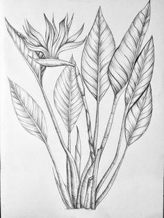Jungle fever drawing ✍️ maniac