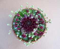 Hens and Chicks succulents .like a mosaic. Beautiful Flowers, Plants, Planting Flowers, Succulents In Containers, Flowers, Cactus Flowers, Air Plants, Container Gardening, Desert Plants