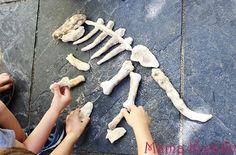 dinosaurier skelett dino knochen selber machen