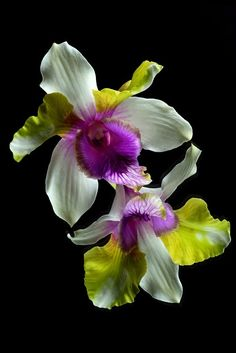 Orchid - Photo by Photographer Patrick Coombes