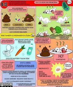 Vitamina B12 en la dieta vegana y vegetariana – Infografías   Nutrición Vegana, Alimentación y Veganismo #nutricioninfografia