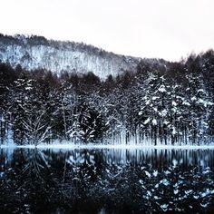 雪国でしか見られない美しい雪景色。 自然とのコラボレーションは息を呑むほど綺麗です。