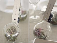 I saw these amazing light bulb terrarium favors in Crystal and Troy's wedding featured on Ruffled. Their whole wedding was filled to the brim with DIY goodness! These place cards/favors jumped out at me a Light Bulb Terrarium, Terrarium Diy, Terrarium Wedding, Diy Wedding Favors, Wedding Reception, Card Wedding, Wedding Blog, Party Favors, Wedding Cakes