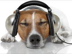 Just Headphone Justheadphone On Pinterest