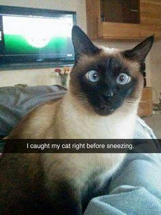 *sneeze*