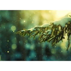 Snowy Photography to Set Your Christmas Spirit ❤ liked on Polyvore featuring backgrounds, christmas and jewelry