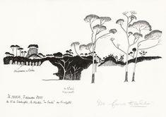 Francis Hallé, Eucalyptus (Île Maria, Polynésie française), 2018
