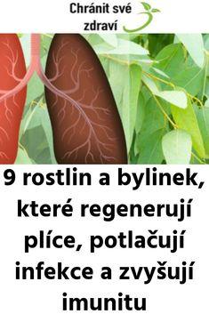 9 rostlin a bylinek, které regenerují plíce, potlačují infekce a zvyšují imunitu Detox, Gardening, Health, Fitness, Health Care, Lawn And Garden, Horticulture, Salud