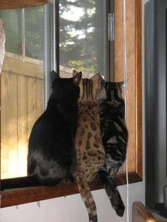 Ventana y gatos