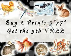 SALE  Buy 2 PRINTs 5x7 get the 3th Free   by happyapplebumblebee, $16.00