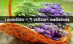 """Levănțica (Lavandula angustifolia) face parte din plantele aromate ale verii, cu flori plăcut mirositoare și proprietăți terapeutice folositoare.    Lavanda vine din verbul latinesc """"lavare"""", care înseamnă """"spălare"""". Așa se explică de ce popoarele din vechime o"""