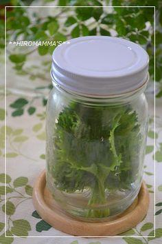 長持ち!~大葉の保存方法~ 大葉20枚(お好み量) 水適宜 1 写真 大葉を流水でよく洗います。 2 写真 縦長の瓶またはタッパーの底に水を張ります。 3 写真 そこへ大葉を縦に入れます。 4 写真 大葉の葉が折れない程度の大きさの瓶に入れるのが理想的です。 5 写真 大葉の茎が水に浸るようにして縦にします。お花を生ける要領ですね。 6 写真 蓋をして冷蔵庫で保存します。 瓶の水は3日に一度は替えます。この状態で約2週間程、みずみずしいままの大葉が保存できます! 7 大葉を洗ってから保存するので、使う時はそのまま取り出して使うだけ♪ とっても便利ですよ(^O^)/
