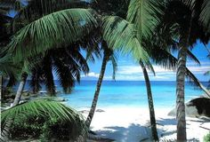A trip to Hawaii