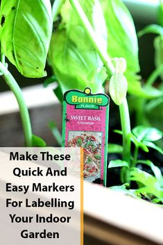 Make These Quick And Easy Markers For Labelling Your Indoor Garden Chalkboard Markers, Chalk Markers, Garden Plant Markers, Garden Plants, Fun Crafts, Diy And Crafts, How To Make Something, Mini Chalkboards, Herbs Indoors