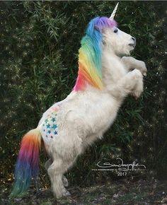 Summer Hobby For Teens - Hobby Illustration Pictures - Hobby Lobby Merchandising - Hobby For Women - Hobby Horse Dragon Pusheen Unicorn, Diy Unicorn, Unicorn And Fairies, Unicorn Hat, Real Unicorn, Unicorn Halloween, Unicorn Costume, Unicorn Crafts, Magical Unicorn