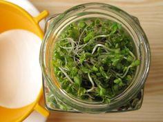 3 nap alatt termett a csíra: ha van egy üres üveged, próbáld ki! Good Foods To Eat, Edible Plants, Seaweed Salad, Sprouts, Spinach, Food And Drink, Van, Paleo, Herbs