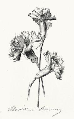 Carnations. Madeleine Lemaire, from Catalogue d'exposition de la société d'aquarellistes français (Exhibition catalog of the society of French watercolorists), Paris, 1882
