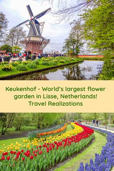 Keukenhof is the world's largest flower garden. This 32 hectare garden with more than 7 million tulips, daffodils and hyacinths offers a rainbow that can be touched. Here I present a photo essay of the world's most beautiful spring garden. Backpacking Europe, Europe Travel Guide, Travel Guides, Travel Plan, Travel Goals, Holland, California Wildflowers, World's Most Beautiful, Beautiful Places