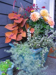 looks like a hot pink Coreopsis (perennial), yellow/pink dahila (tender bulb), rust-leafed coleus (annual), white-edged Euonymous (shrubby groundcover), and the silver trailing plant could be an artemesia (perennial)