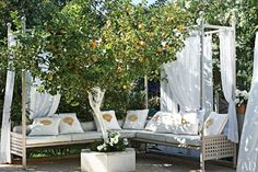 outdoor seating under the trees, lemons, flowers... white curtains, but oversized seating, maybe wrought iron and wicker...