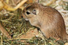 Siano dla małych ssaków: http://www.kakadu.pl/Pokarmy-dla-ma%C5%82ych-ssakow/siano-dla-maych-ssakow.html