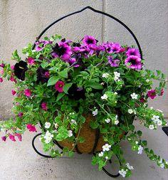 flowers gardens on pinterest hanging baskets petunias and sweet potato vines. Black Bedroom Furniture Sets. Home Design Ideas