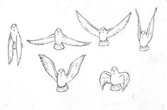 ★ || CHARACTER DESIGN REFERENCES | キャラクターデザイン  • Find more artworks at https://www.facebook.com/CharacterDesignReferences & http://www.pinterest.com/characterdesigh and learn how to draw: #concept #art #animation #anime #comics || ★ Flying Bird Drawing, Bird Drawings, Bird Flying, Fly Drawing, Gesture Drawing, Animal Drawings, Flash Animation, Animation Reference, Drawing Reference