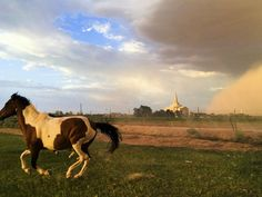 A horse runs in a field while a dust storm approaches