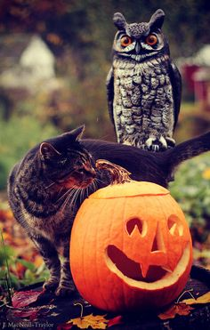 Halloween Cat by gypsymarestudios, via Flickr