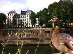 Paris Duck