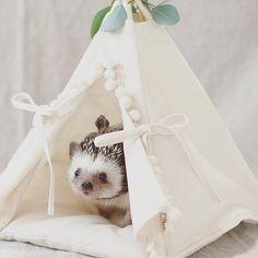 Hedgehog bed hedgehog house hedgehog teepee with a pad Hedgehog Pet Cage, Hedgehog Care, Pygmy Hedgehog, Baby Hedgehog, Diy Hedgehog House, Hedgehog Habitat, Animal Room, Animal House, Animals For Kids