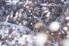 북한산 우이령길, Mt. Bukhan _ frozen flowers