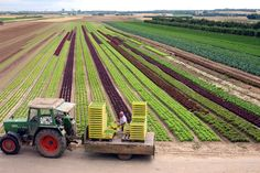 The fields of Rheinhessen extend directly outside the city. The farmers of the Mainz suburbs cultivate vegetables and lettuce for the Mainz weekly market, too. ©Landeshauptstadt Mainz