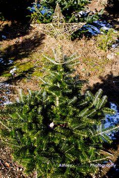Pine Tree Star  Christmas  Hopeful Winter